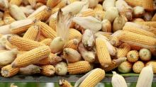 Rain brings relief to China's parched grain fields