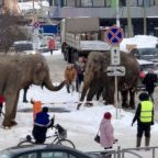 Elephants run away from circus to play in snow