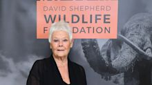 Dame Judi Dench: Acting on Zoom is unnerving