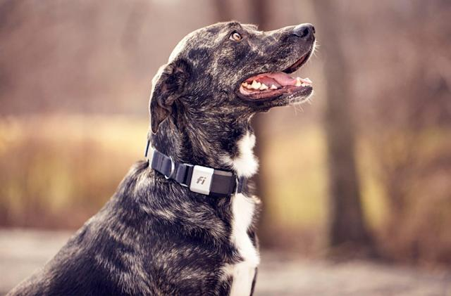 Fi's GPS pet tracker lasts three months between charges