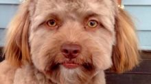This Puppy With A Strangely Human Face Is Freaking Out The Internet