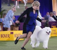 Top dog! Pekingese named Wasabi wins Westminster dog show