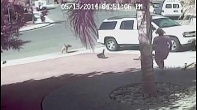 Cat Saves Young Boy From Dog Attack