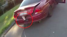 Car stopped after 'limb' spotted hanging out of boot