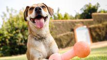 Pets felizes: brinquedos para cães, gatos e roedores