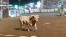 Video shows bull jumping into crowded stands at Idaho rodeo