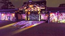 世界遺產變身光雕絕景 二條城櫻花祭世界最驚艷