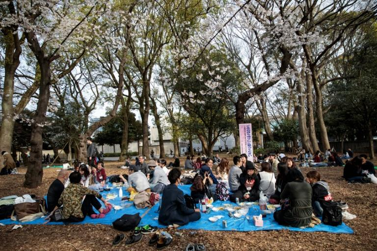 Areas popular for hanami picnics were roped off, but some in Tokyo found spots to eat and drink under the blooms anyway (AFP Photo/Behrouz MEHRI)
