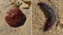 Unusual 'eggs' wash up on beach intriguing local community