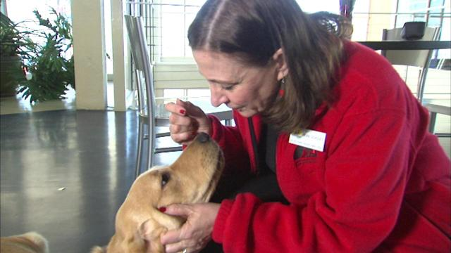 Service dogs help owners be independent