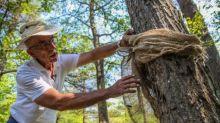 Landowners plead for help halting caterpillar invasion