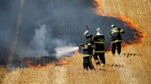 Drier than the Sahara: heatwave fans fire risk for French farmers
