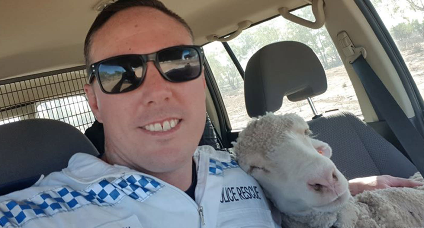 Police officer's sweet gesture for distressed sheep during heatwave
