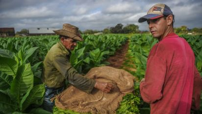 Vendas globais de charutos cubanos sobem 7%, apesar de leis antitabaco