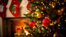 Natale, come festeggiarlo in modo green: la guida del WWF