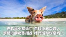 巴哈馬小豬離奇死亡 奈良鹿屢次襲人 景點以動物作招徠 牠們活得快樂嗎?