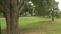 Tree Trimming Along Historic Green Angers Neighbors