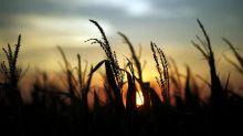 Mal clima en julio podría impactar cosechas de granos de Rusia en 2020: meteorólogos