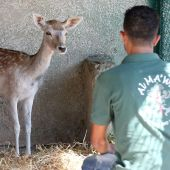 Gaza zoo animals arrive to start new life in Jordan