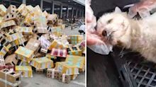 'Tragic' discovery after thousands of pet dogs, cats and rabbits dumped at depot