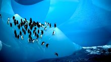 There are only five places in the world you can see penguins in the wild
