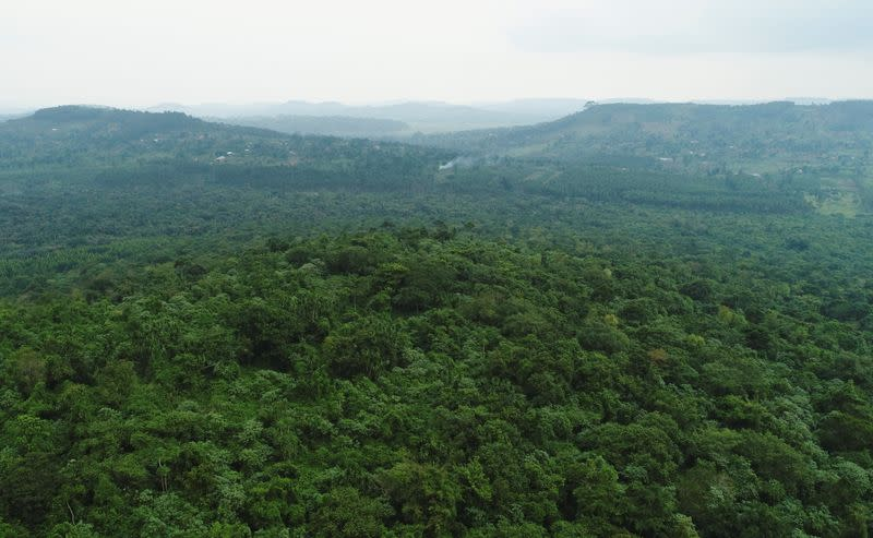 Uganda slowly increases forest cover by tapping private companies