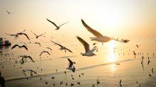 Self-flying glider 'learns' to soar like a bird