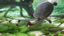 Cette tortue à tête de grenouille vivait à Madagascar il y a 100 millions d'années