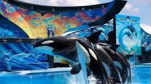 Coronavirus: SeaWorld, Legoland join theme parks shutting down temporarily