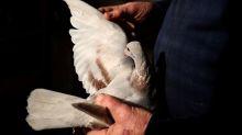 Move over James Bond; India returns alleged bird spy to Pakistan