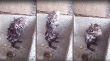 La verdad tras el vídeo de la rata que han visto 51 millones