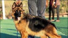 Erster Hund mit bestätigter Coronavirus-Infektion in den USA ist tot