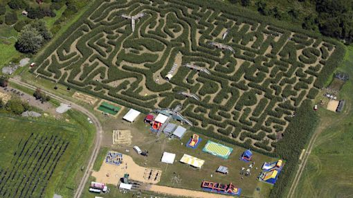 A corny tribute: Red Sox slugger immortalized in corn maze
