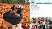 The Most Popular Pets on Instagram in 2017 Are Seriously Adorable