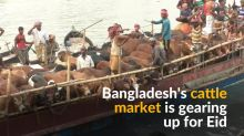 Bangladesh's cattle market thrives ahead of Eid