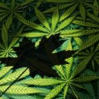 The 1 Thing Investors Should Do Now That Canadian Marijuana Stocks Have Fallen