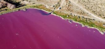 Pollution causes lake to turn bright pink