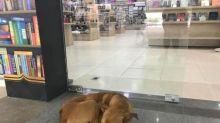 Cachorro de rua rouba livro de livraria e funcionários se surpreendem ao ver o título