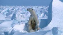 """Dans l'Arctique, """"on peut se retrouver dans une situation où il n'y aura plus du tout de banquise, même l'hiver"""", alerte un chercheur"""