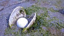 Absténganse golfistas mediocres que contaminen el mar con bolas de golf