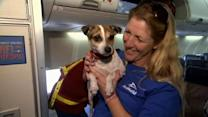 Dogs, cats displaced by Sandy arrive in San Diego