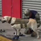 Frida the Mexican Marine Dog Prepares to Assist in Earthquake Rescues