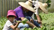 國旅大爆發 花蓮農改場推薦8條農遊行程