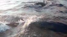 Pescadores são cercados por grupo de orcas em praia na Bahia; assista