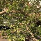 Isaias impacts thousands of trees, causing major outages on Long Island