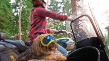 Canine eyewear may help your dog's sight