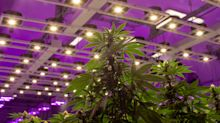 Britain pivoting to weed product as a wellness tool will boost sector 478%