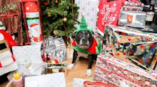 Man spends more than $8800 on Christmas presents for his dog