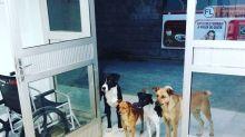 Cães de morador de rua fazem plantão na porta de hospital para esperar o dono