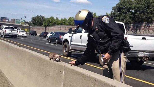 Chihuahua Sparks Big Story After Highway Rescue